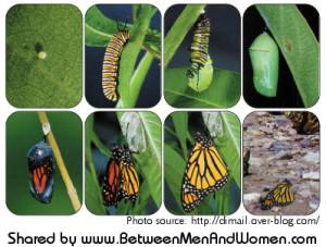 caterpillar-Chrysalis-transmogrify-BMWtext